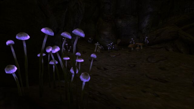 File:Walkingboxpurplefungus.jpg