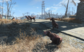 FO4 Pack of Wild Dogs.png