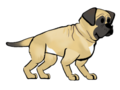 FoS English Mastiff.png