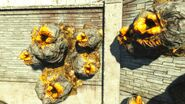 NW-Stingwing-nest