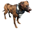 Fo4 dog.png
