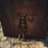 FO4-Junkyard dog-brown