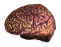 Your brain.png