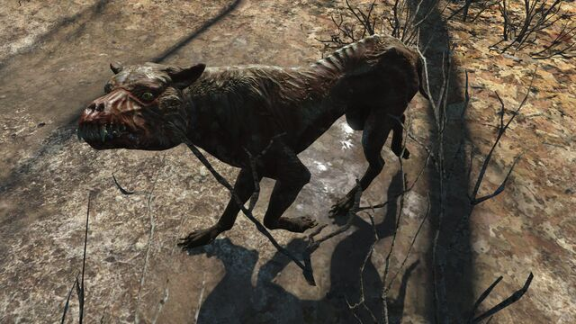 File:FO4 Feral mongrel.jpg
