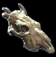 Jawless brahmin skull