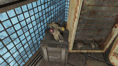 Revere Station brahmin skull