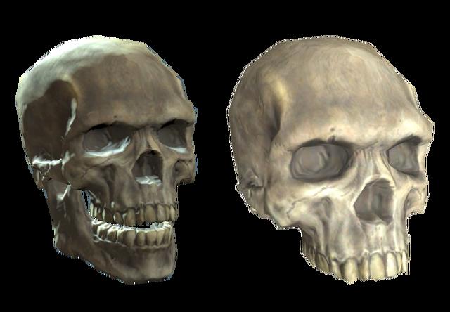 File:Plastic (upper) skull.png