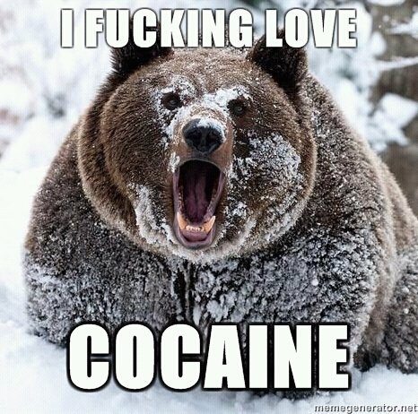 File:Cocaine bear.jpg
