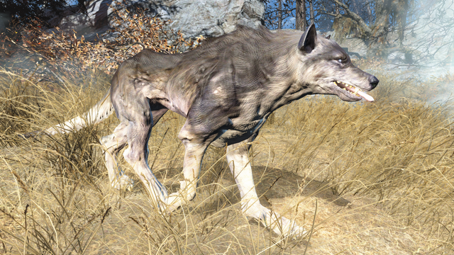 File:Fo4FH feral wolf.png