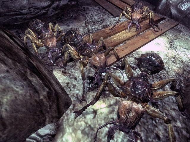 File:Springvale ants.jpg