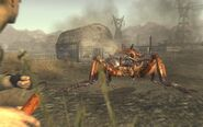 Giant ant fnv