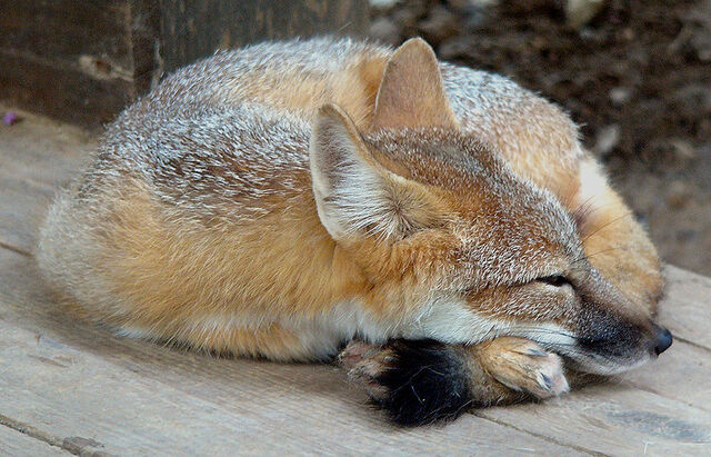 File:Aww, he's tired..jpg