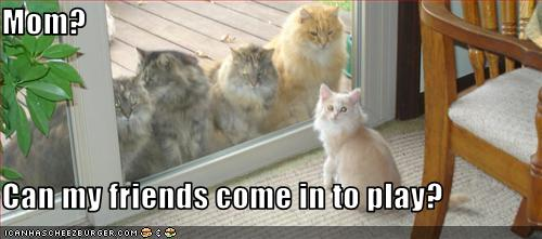 File:Funny-pictures-cat-wants-to-invite-friends-over.jpg