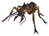 Giant soldier ant