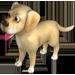 File:Labrador.png