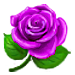File:PurpleRose.png