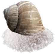 Salt Snail