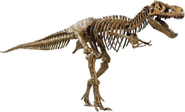 File:SkeleT-Rex.jpg