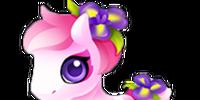 Petal Pony