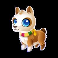 Peruvian Llama Baby