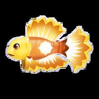 Sunfish Adult