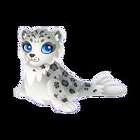 Snow Leopard Seal Adult