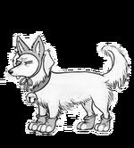 Sirius cat