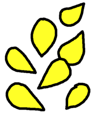 Seeds Yellow