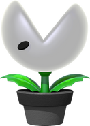 Nipper Plant Potted