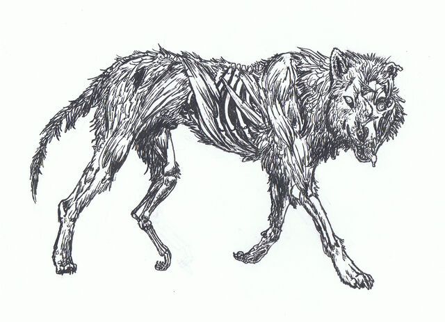 File:Zombie Wolf by LLawlietDeathNote.jpg