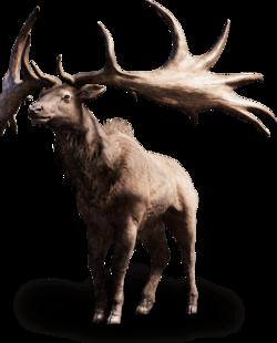 Far cry primal tall elk