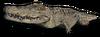 FC3 cutout albinocrocodile