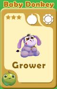 Grower Baby Donkey A