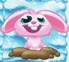 Rob the Rabbit on snow