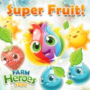 Super Fruit introduction