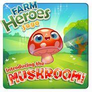 Introducing the Mushroom