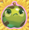 Apple grumpy on hay