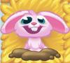 Rob the Rabbit on hay