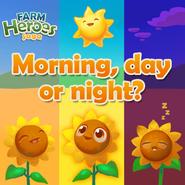 Morning, day or night