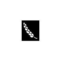 Wheat FS15