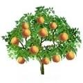 Peach Tree.jpg
