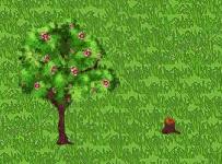 File:Cinnamon Tree Growth.jpg