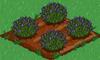Lavender 66.png