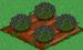 Lavender 66
