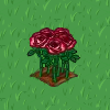 Perfect Fire & Ice Rose-icon