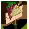 Amaranth Mastery Sign-icon