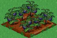 Arquivo:Eggplant 66.png
