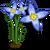 Bluets-icon