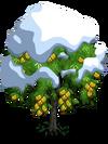 Indian Laurel Tree8-icon