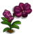 Black Orchid-icon